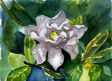 Watercolor white flower illustration painting. On paper Stock Images