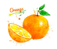 Watercolor whole and half of orange. Hand drawn watercolor whole and half of orange with paint splashes Stock Photography