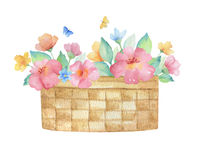 Watercolor wicker basket with flowers. Stock Photos