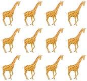 Watercolor wild animals of africa - giraffe. Hand drawn royalty free illustration