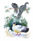 Watercolor wild exotic birds on flowers Royalty Free Stock Images