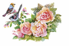 Watercolor wild exotic birds on flowers Stock Photos