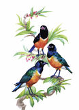 Watercolor wild exotic birds on flowers Stock Images