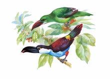 Watercolor wild exotic birds on flowers Stock Photo