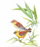 Watercolor wild exotic birds on flowers Royalty Free Stock Photography