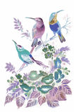 Watercolor wild exotic birds on flowers Stock Photos
