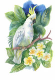 Watercolor wild exotic birds on flowers Stock Photography