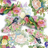 Watercolor Wild exotic birds on flowers seamless pattern on white background Stock Images