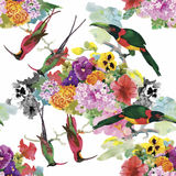 Watercolor Wild exotic birds on flowers seamless pattern on white background Royalty Free Stock Photography