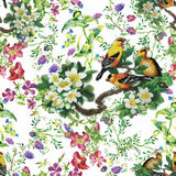 Watercolor Wild exotic birds on flowers seamless pattern on white background Royalty Free Stock Images