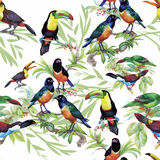 Watercolor Wild exotic birds on flowers seamless pattern on white background Stock Photo