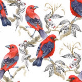 Watercolor Wild exotic birds on flowers seamless pattern on white background Stock Photos
