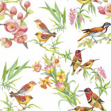 Watercolor Wild exotic birds on flowers seamless pattern on white background.  Royalty Free Stock Images