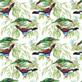 Watercolor Wild exotic birds on flowers seamless pattern on white background.  Royalty Free Stock Photography