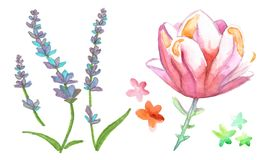 Watercolor wild flower lavander royalty free illustration