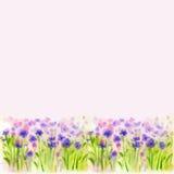 Watercolor Wild Flower Vector Borderters  Stock Photos