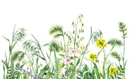 Watercolor wild flowers border. Hand drawn wildflowers. Watercolor flowers, wild oats and green grass on white background. Colored floral border Royalty Free Stock Photo