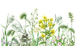 Watercolor wild flowers border. Hand drawn wildflowers. Watercolor flowers, wild oats and green grass on white background. Colored floral border Stock Images