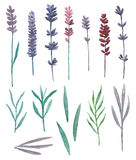 Watercolor wild flowers and grass field vector. Purple flowers clip art Stock Photography