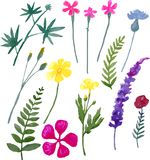 Watercolor wild flowers and leaves on a white background. 