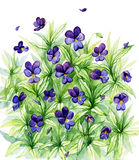 Watercolor wild forest violets stock illustration