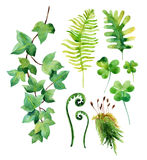 Watercolor wild leaves set isolated on white background. Woods leaves, moss, ivy branch and clover. Watercolor natural wildlife set. Hand painted forest Stock Images