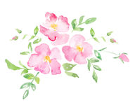 Watercolor wild rose - hand drawn illustration Stock Photography