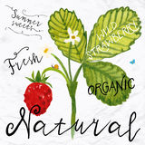 Watercolor wild strawberry Royalty Free Stock Images