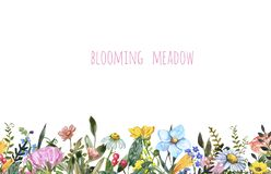 Free Watercolor Wildflower Frame On White Background. Beautiful Summer Meadow Flowers Border, Botanical Backdrop Stock Image - 172126441