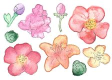 Watercolor Wildflower and Succulent Set Isolated vector illustration
