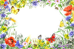 Watercolor wildflowers frame Stock Photography