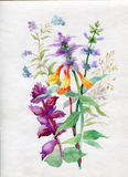 Watercolor wildflowers and grasses. Watercolor beauty wildflowers and grasses Stock Photography