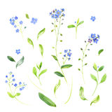 Watercolor wildflowers and leaves Stock Images