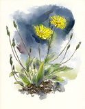 Watercolor wildflowers Royalty Free Stock Photo