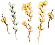 Watercolor willow branch collection Royalty Free Stock Photos