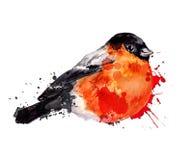Watercolor winter bird - bullfinch Royalty Free Stock Photography
