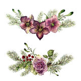 Watercolor winter floral elements with fir isolated on white background. Vintage style set with christmas tree branches. Rose, holly, mistletoe, hellebore Stock Images