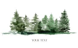 Watercolor winter foggy evergreen forest. Hand painted fir trees illustration isolated on white background. Holiday clip