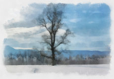 Watercolor winter landscapes. Winter landscape with the pine trees, watercolor Stock Photos
