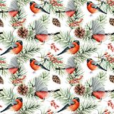 Watercolor winter pattern with bullfinches. Hand painted birds, pine branches with cones, berries isolated on white royalty free illustration