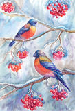 Watercolor winter picture with bullfinches, sitting on branches. Of rowan. Painting, suitable for poster, craft, cover, postcard and other printed products stock illustration