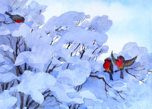 Watercolor winter scene. Bullfinch sitting on a snow-covered bra. Nches Stock Image