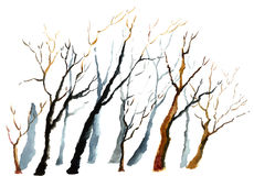 Watercolor winter tree. Stock Photos