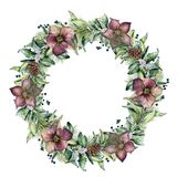 Watercolor winter wreath with hellebore flowers. Hand painted snowberry and eucalyptus branch isolated on white. Background. Floral border for design Stock Photos
