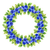 Watercolor wreath with bilberry Royalty Free Stock Image