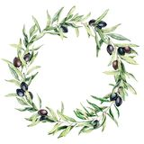 Watercolor wreath with black olive berries and leaves. Hand painted floral border with olive fruit and tree branches. With leaves isolatedon white background royalty free illustration