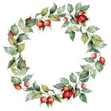 Watercolor wreath with branch of Dog rose, red berries and green leaves. Hand painted briar and hips isolated on blue. Background. Illustration for design Royalty Free Illustration