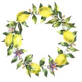 Watercolor wreath with branch of fresh citrus fruit lemon, green leaves and flowers. Natural round frame isolated on white background vector illustration