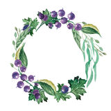 Watercolor wreath of currants and leaves. Delicate wreath of currants and leaves painted in watercolor Stock Photography