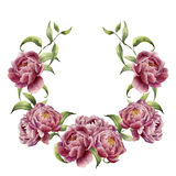 Watercolor wreath with greenery branch and peony. Hand painted floral frame with flowers and leaves isolated on white Royalty Free Stock Photos